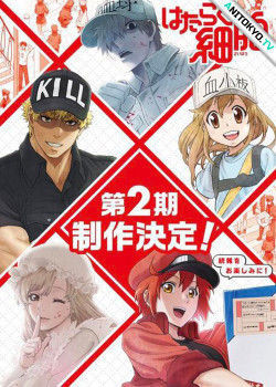 Работа клеток [ТВ-2] / Hataraku Saibou 2nd Season постер